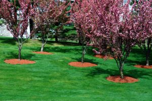 south florida lawn care